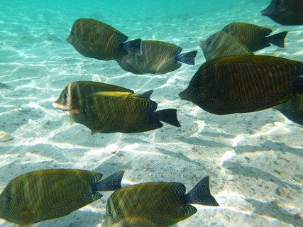 FOTKA - pod  vodou
