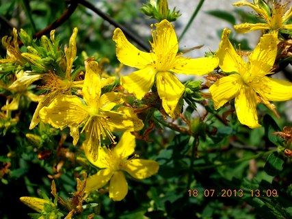 FOTKA - 15 - 18.7. - 20 - plevelní kvítí