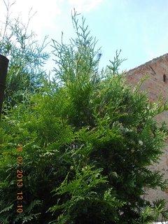 FOTKA - 15 - 18.7. - 23 - sousedovi krásně rostou