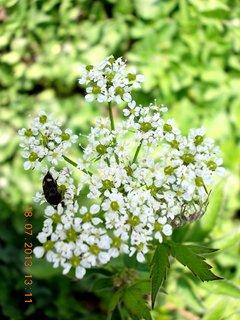 FOTKA - 15 - 18.7. - 26 - plevelní kvítí