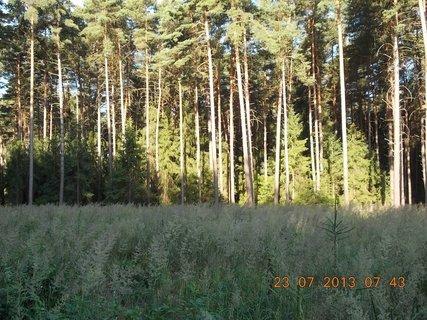 FOTKA - 21+22+23.7. - 16 - v lese