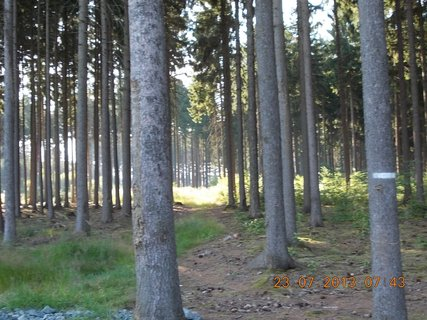 FOTKA - 21+22+23.7. - 17 - v lese