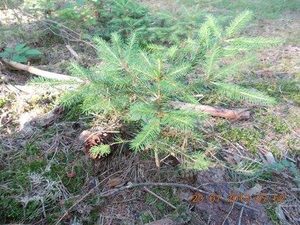 FOTKA - 21+22+23.7. - 18 - v lese