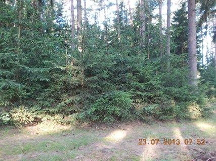 FOTKA - 21+22+23.7. - 19 - v lese
