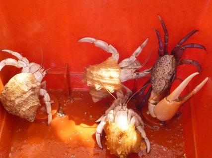 FOTKA - krasavci z moře