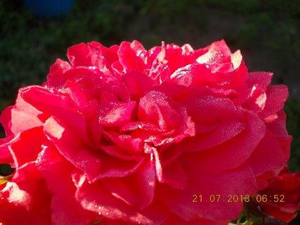 FOTKA - 20 - 21.7. - 19 - za ranní rosy