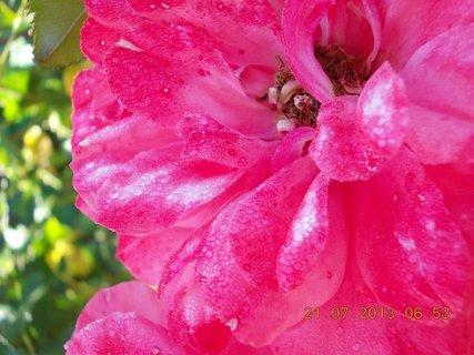 FOTKA - 20 - 21.7. - 21 - za ranní rosy