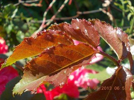 FOTKA - 20 - 21.7. - 22 - za ranní rosy