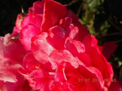 FOTKA - 20 - 21.7. - 23 - za ranní rosy