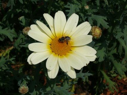 FOTKA - kytička a včelka Mája
