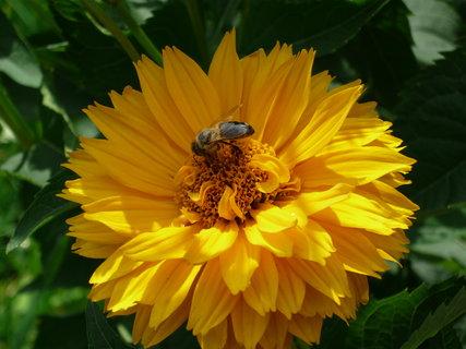 FOTKA - kytička a včelka Mája 2
