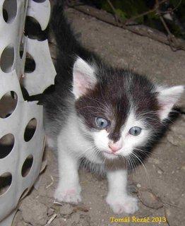 FOTKA - kočky 6