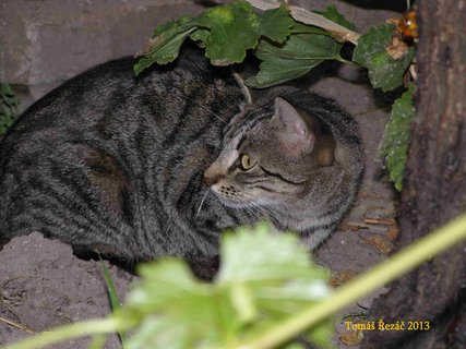 FOTKA - 6 kočka