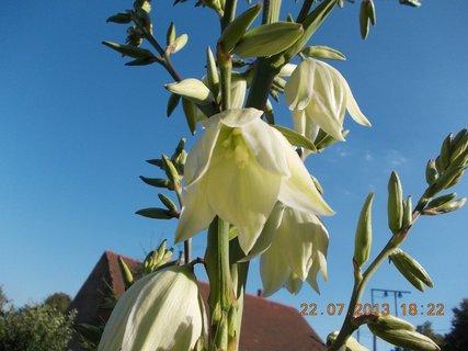 FOTKA - 22 - 23.7. - 11 - květy na Juce