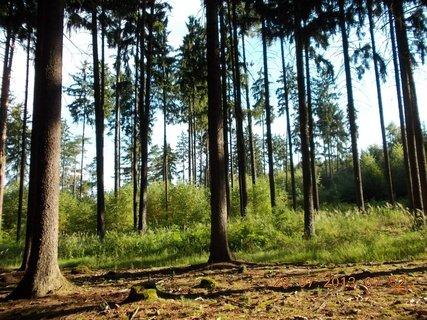 FOTKA - v lese - 1