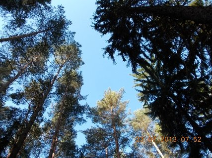 FOTKA - v lese - 2