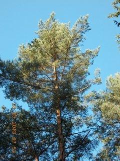 FOTKA - v lese - 3