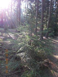 FOTKA - v lese - 4