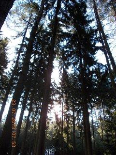 FOTKA - v lese - 5