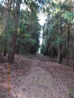 FOTKA - v lese - 6