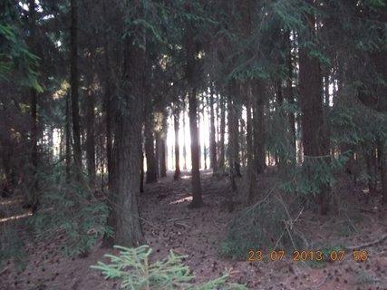 FOTKA - v lese - 7