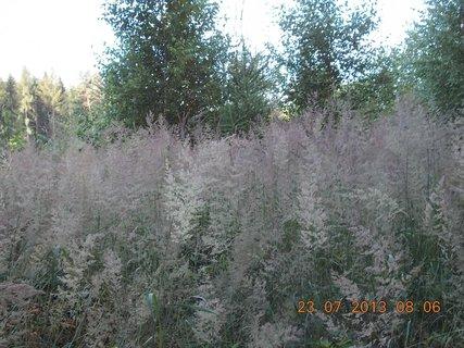 FOTKA - v lese - 10