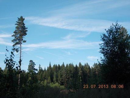 FOTKA - v lese - 11