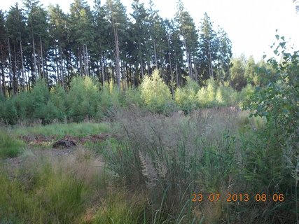 FOTKA - v lese - 12