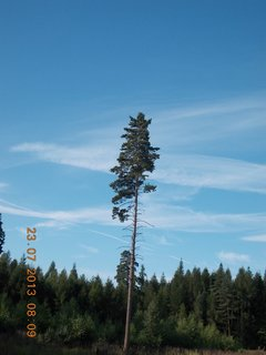 FOTKA - v lese - 13