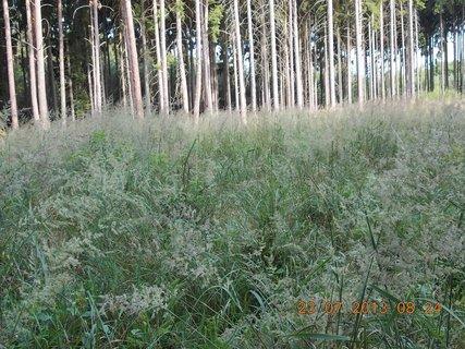 FOTKA - v lese - 16