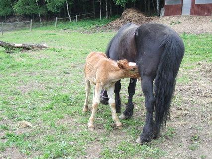 FOTKA - krása koní