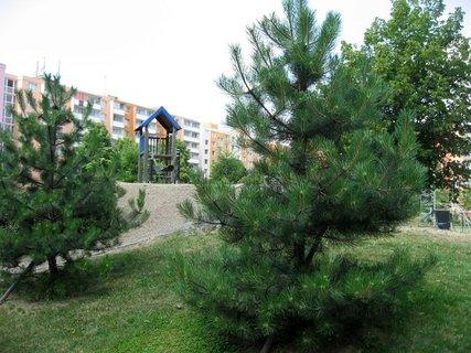 FOTKA - Dnes - liduprázdné sídliště i hřiště 11