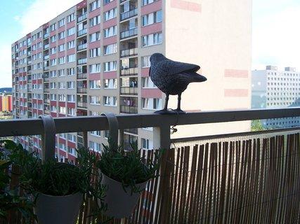 FOTKA - umělý pták na strašení holubů