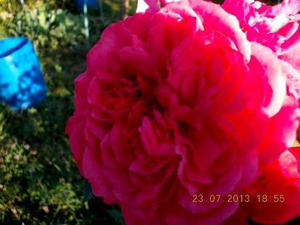 FOTKA - 23.7. - l�to - 26