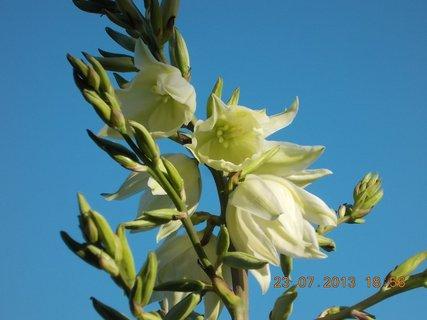 FOTKA - 23+ 24.7 - 4 - krásné zvonečky na Juce