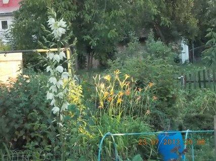 FOTKA - 23+ 24.7 - 6 - pohled z okna do zahrady