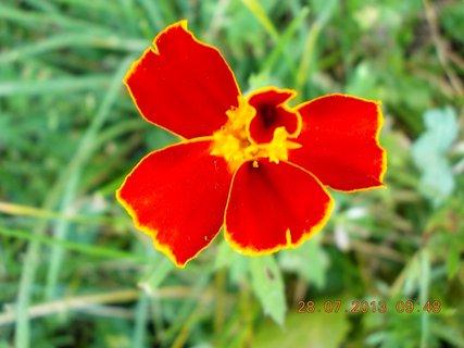 FOTKA - 28.července - 1 - kouzlo květu Afrikánu