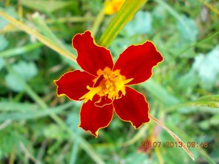 FOTKA - 28.července - 2 - kouzlo květu Afrikánu