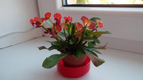 FOTKA - i druhý krásně kvete