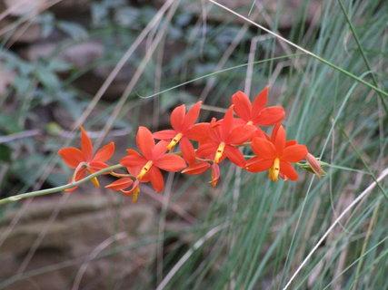 FOTKA - květina