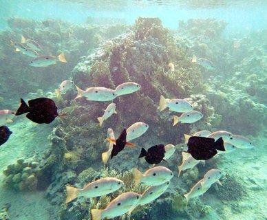 FOTKA - Rudé moře 4