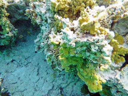 FOTKA - Rudé moře 14