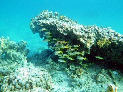 FOTKA - Rudé moře 15