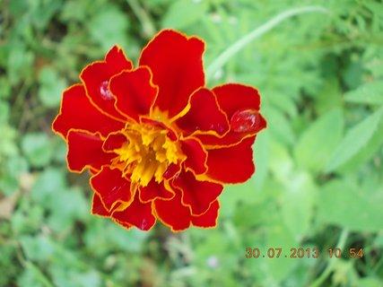 FOTKA - 30. července - 21 - jsem krásný květ