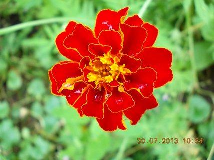 FOTKA - 30. července - 22 - jsem krásný květ