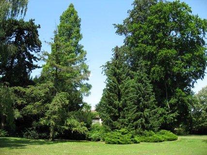 FOTKA - Z Královské zahrady  12