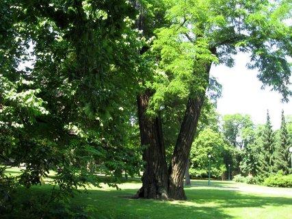 FOTKA - Z Královské zahrady  14