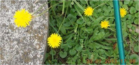 FOTKA - 2 - 30.7 - u studny kvítí