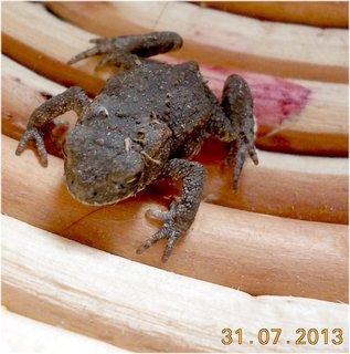 FOTKA - 30 - 31.7. - 14 - malá žabička