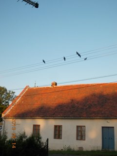 FOTKA - 31.7. - 3.8. - 16 - holoubci na drátech